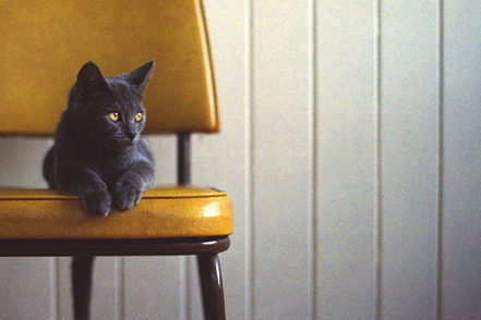 Cat-yellow-chair